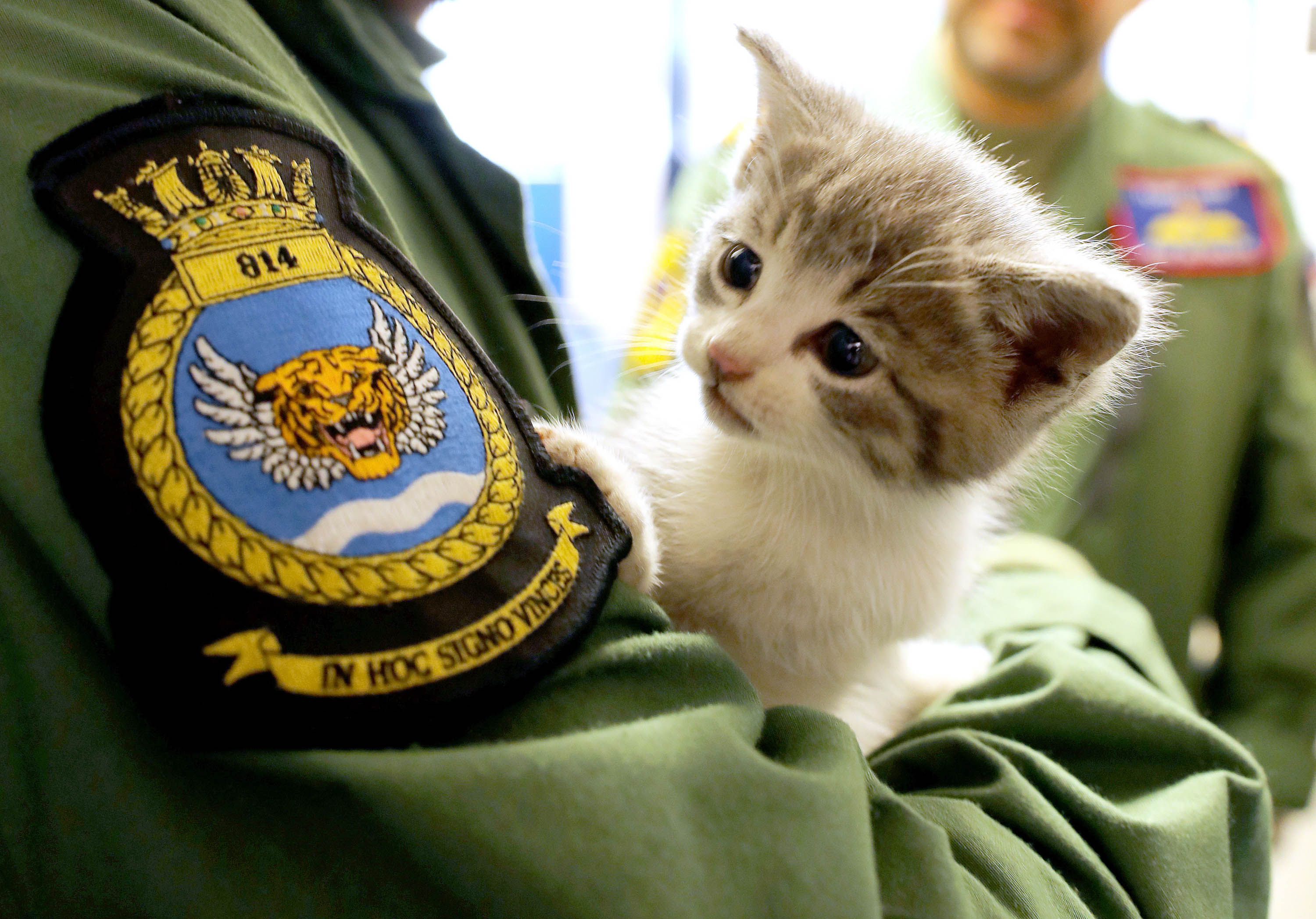 Tigger – the kitten which survived a 300-mile journey hiding INSIDE the bumper of a navy helicopter pilot's car