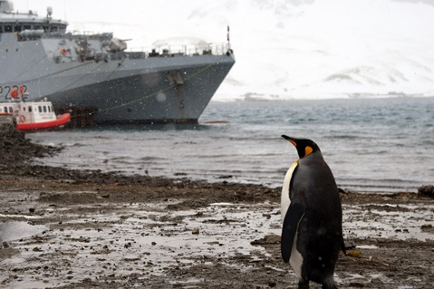 A penguin studies HMS Forth while berthed at King Edward Point
